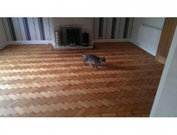 parquet-restoration-in-southampton-after